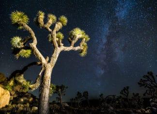 Dark sky - Joshua Tree - Camping - Hiking - adventure - national park