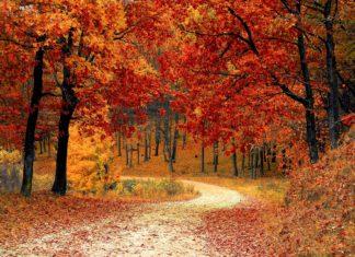 fall, fall leaves, georgia, northern georgia, trekbible, travel inspiration, trip ideas