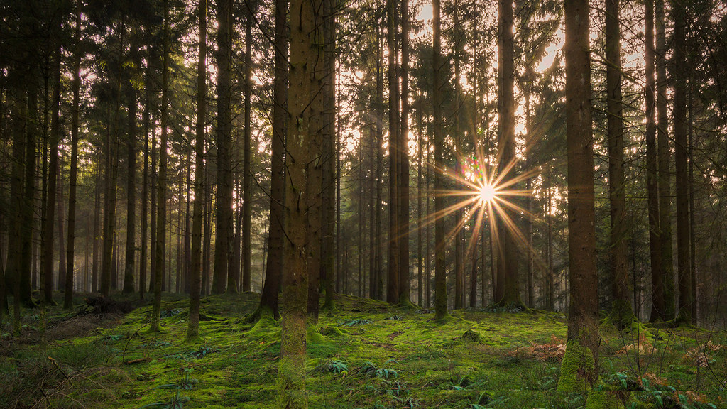 The Black Forest Germany >> The Black Forest A Wondrous Fairytale Land In Germany