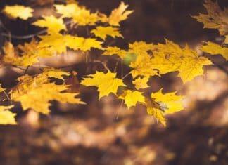 fall, fall colors, fall peak, michigan, autumn, fall travel, trekbible