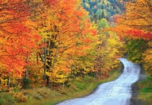 trekbible, travel, new england, fall, maine, acadia, autumn, foliage, national parks, leaves, september,travel, road trips, adventure