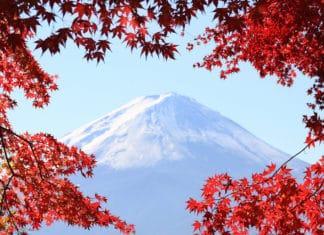 Japan, fuji, tea, travel, hiking, trekbible, travel, autumn, fall, leaves, foliage, mountain, asia