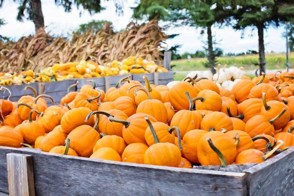 Thanksgiving - pumpkin