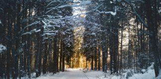 winter - women's down jacket