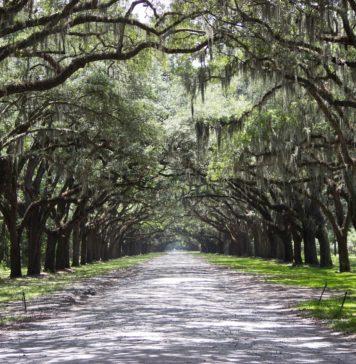 trekbible, Savannah, travel, things to do, Georgia, visit Georgia, visit Savannah, trip ideas, cities, historical, ghost tours, musuems