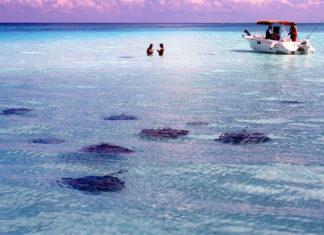 cayman islands, grand cayman island, grand cayman islands, cayman, cayman island, islands, grand cayman ky, caymen islands, where are the cayman islands, the cayman islands, islas caiman, grand caymen, caymen, visit cayman islands, caymans, cayman islands tourism, camen islands, grand cayman tourism, caymanislands ky, cayman islands ky, cayman islands travel, caiman islands, where is the cayman islands, grand caymen islands, cayman tourism, isla caiman, department of tourism, www.caymanislands.ky, caymanislands.ky, grand cayman information, grand caymen island, caymans island, the caymans, caymon islands, gran caiman, camen island, cayman islands official site, tourism in cayman islands, www caymanislands ky, caiman island, camin islands, visit grand cayman, cayman islands website, gran cayman, travel cayman islands, the cayman island, visiting cayman islands, grand canyon island, cayman island tourism, kayman islands, grand camen, caman island, catman islands, caymanislands, cayaman island, ceyman islands, camon islands, islas cayman, camem islands, kamen islands, who owns the cayman islands, grand cayman, grand caymans, grand cayman cayman islands, the grand cayman, www caymanislands com, cayman islands com, cayman islands.com, grandcayman, caymanislands.com, cauman island, where is grand cayman islands, cayman islands cayman islands, where is the grand cayman islands, grand caymab, the grand cayman islands, cayman islanda, cayman islans, isla cayman islands, grand caman, cauman islands, caymon island, grand caynan, cayman slands, cayman isalnds, grand camon, cayman islandas, grand cauman, grand caymon islands, where are the caymen islands, kaman islands, caan islands, kaiman island, caymond islands, cayman oslands, grand camin, the cayman, cayman island official website, cayman islands where, kayman island, the caymen islands, www.cayman islands, where are cayman islands, grand caiman, in the cayman islands, where is grand cayman island, camon island, cyman islan