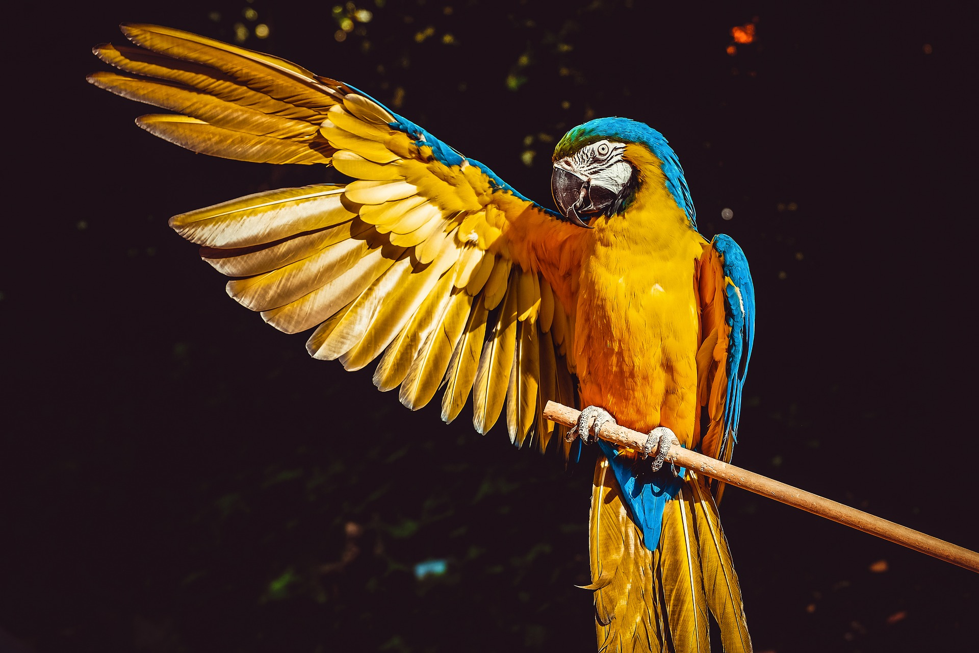 The 10 Best Zoos In The US: The Animal Kingdom Awaits
