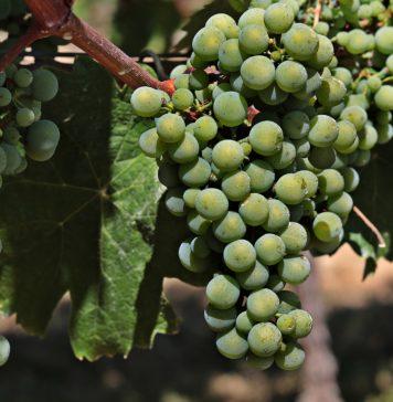 wineries in ohio