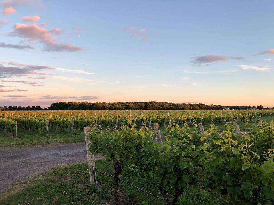 long island wineries - Martha Clara Vineyards