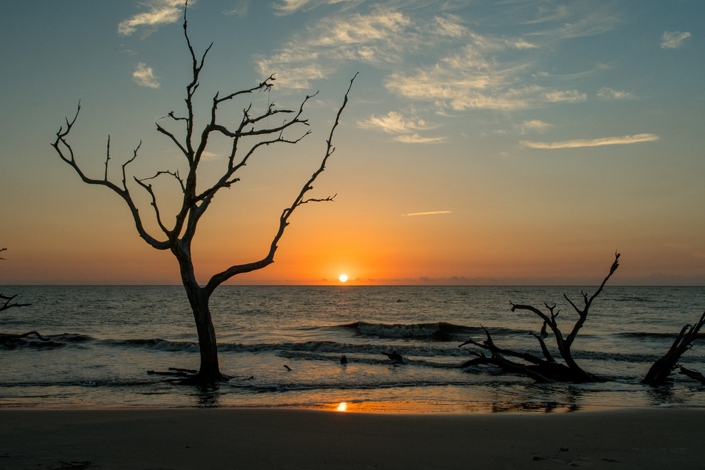 places to visit in georgia - Driftwood Beach, Jekyll Island