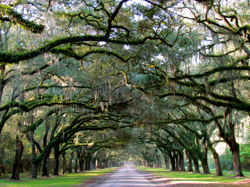 places to visit in georgia - Wormsloe Historic Site
