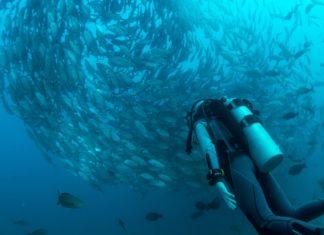 best places to scuba dive, best diving in the world, best scuba diving in the world, best scuba diving, best places to scuba dive in the world, best places to dive, best dive sites in the world, best diving spots in the world, best diving, scuba diving places, best places to dive in the world, best diving locations, best scuba diving locations, amazing dive sites, top scuba diving sites, top 10 scuba diving sites in the world, top ten scuba diving sites in the world, top diving places in the world, top places to scuba dive, best scuba diving locations in the world, worlds best diving, scuba sites, best dive sites, famous dive sites, good places to scuba dive, top scuba diving locations, top dive locations, best places to go scuba diving, popular scuba diving locations, top ten diving spots in the world, famous scuba diving locations, top scuba, best scuba diving destinations, scuba diving locations, top 10 diving spots in the world, great diving spots, scuba locations, best diving spots, best scuba destinations in the world, top ten scuba diving sites, 10 best diving sites in the world, top diving spots, top 10 scuba diving spots in the world, diving destinations, great diving locations, top 20 dive sites in the world, top dive sites in the world, cool scuba diving, diving locations, top 10 dive locations in the world, great places to scuba dive, best scuba sites in the world, world dive sites, best scuba locations in the world, where can you scuba dive, good scuba diving locations, top 10 dive sites in the world, good diving locations, top places to dive in the world, top diving spots in the world, top 50 dive sites, best scuba diving spots in the world, best places in the world to go scuba diving, top dives in the world, good places to dive, top 10 dive sites, top 10 diving locations, worlds best scuba diving, top scuba destinations, best scuba locations, best places to go scuba diving in the world, where is the best place to scuba dive, where to scuba dive, where