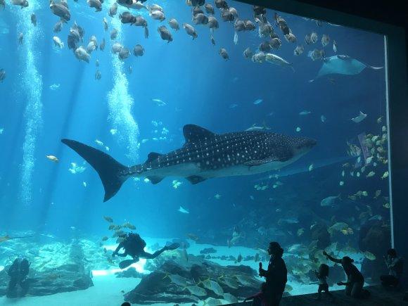 university of georgia aquarium