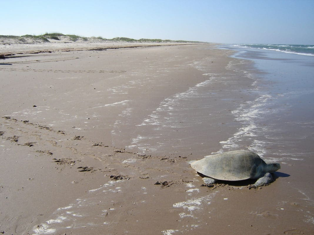 best beaches in texas - Padre Island National Seashore