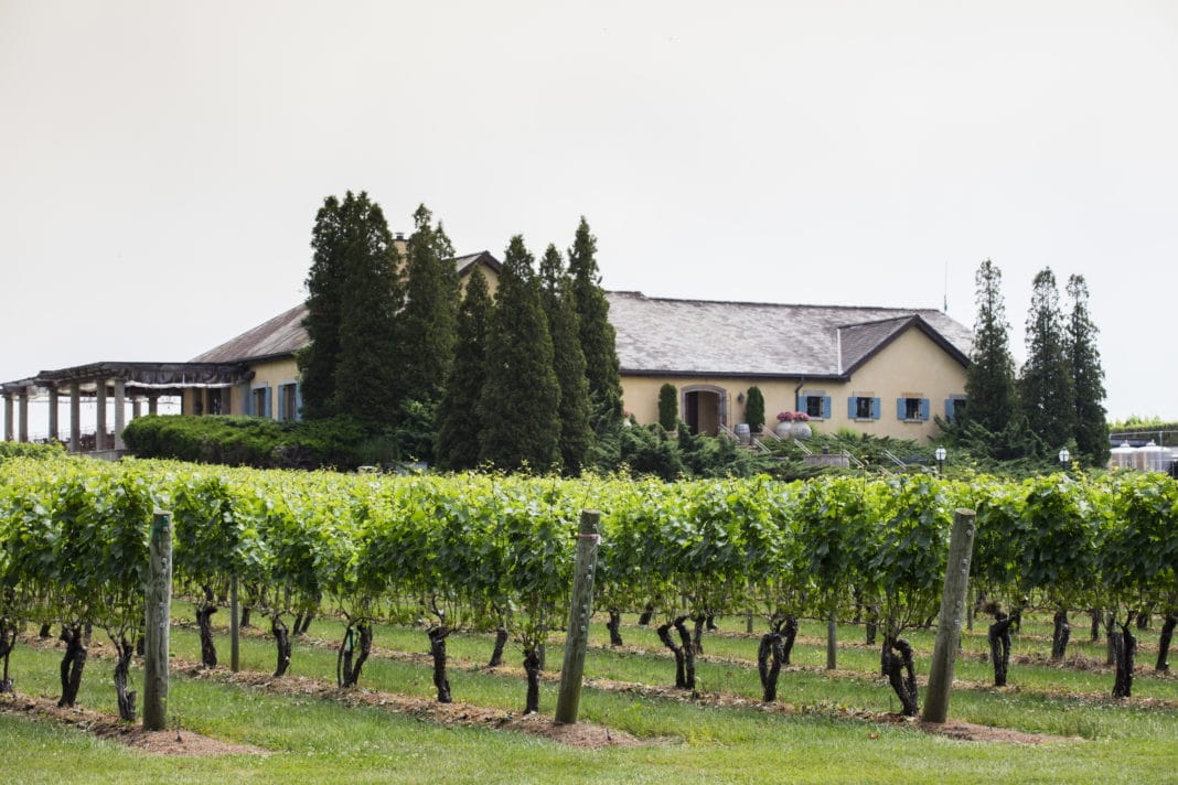 long island wineries - Wölffer Estate Vineyard