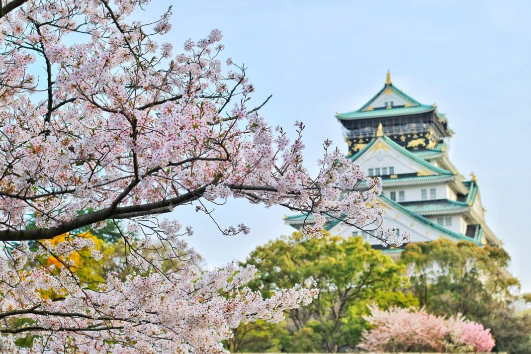 trekbible, travel, travel intel, trip ideas, cherry blossoms, cherry blossom, Japan, visit Japan, fall travel