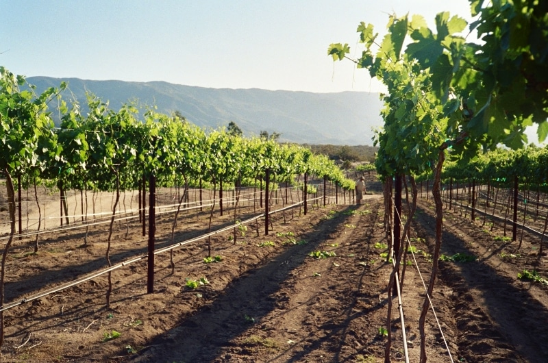 San Diego Wineries - Hawk Watch Winery