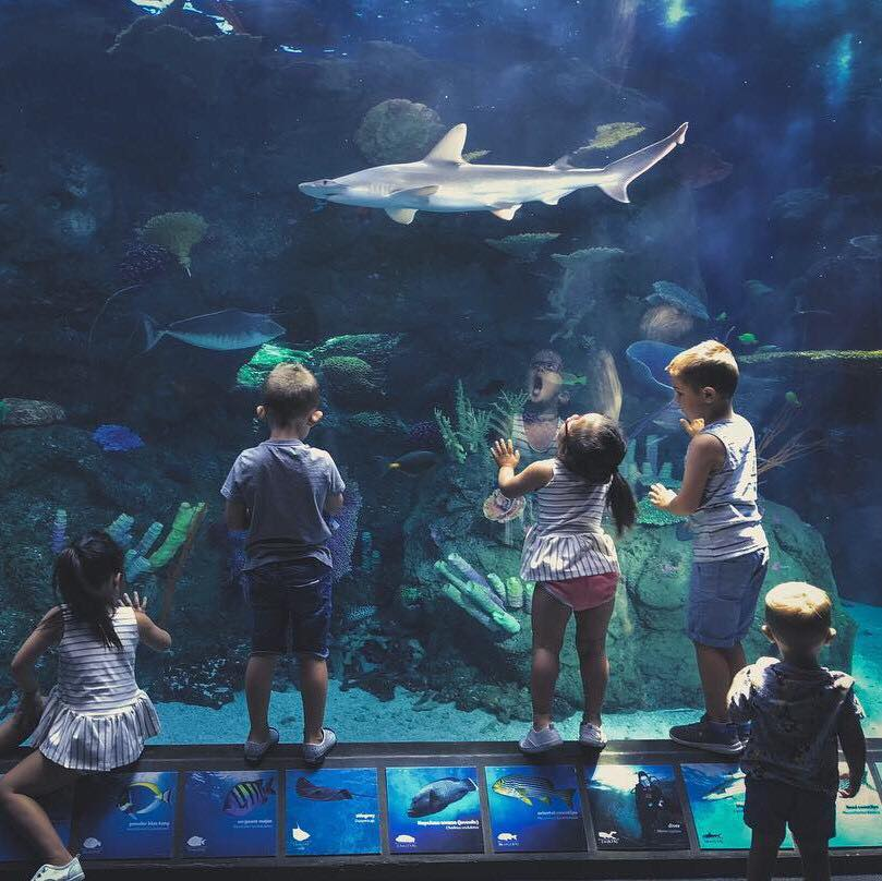 things to do in long beach - Aquarium of the Pacific