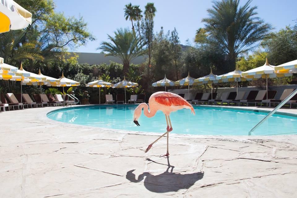 best hotels in palm springs - Parker