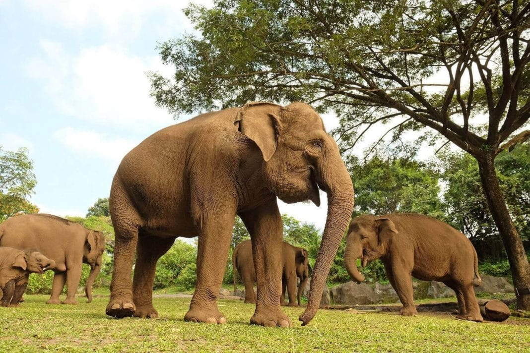 things to do in bali - Elephant