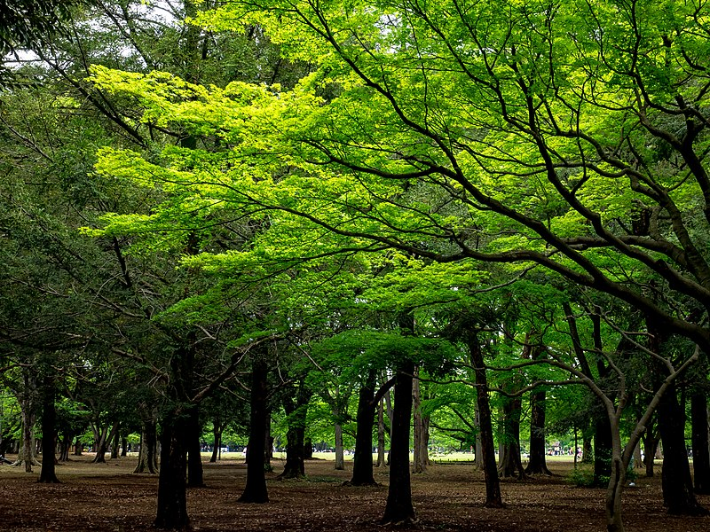coolest places to visit in Tokyo - Yoyogi Park