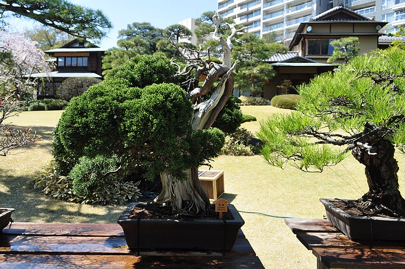 coolest places to visit in Tokyo - Happo-en Japanese Garden