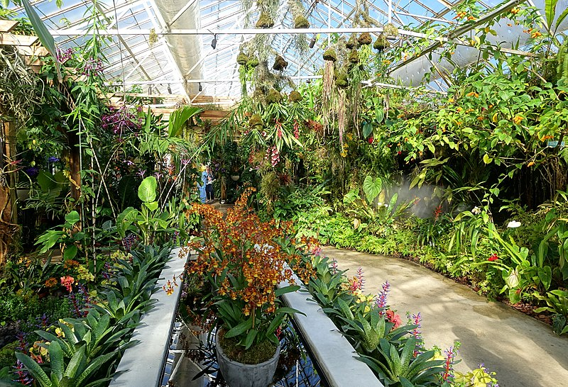 things to do in sarasota - Marie Selby Botanical Gardens