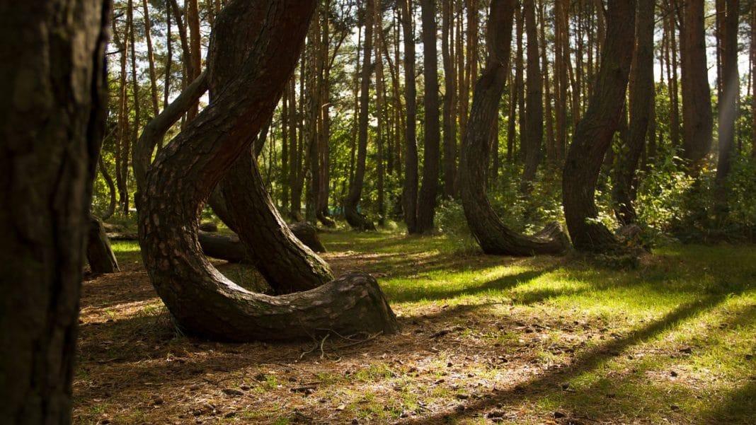 secret travel destinations - Crooked Forest, Nowe Czarnowo, Poland