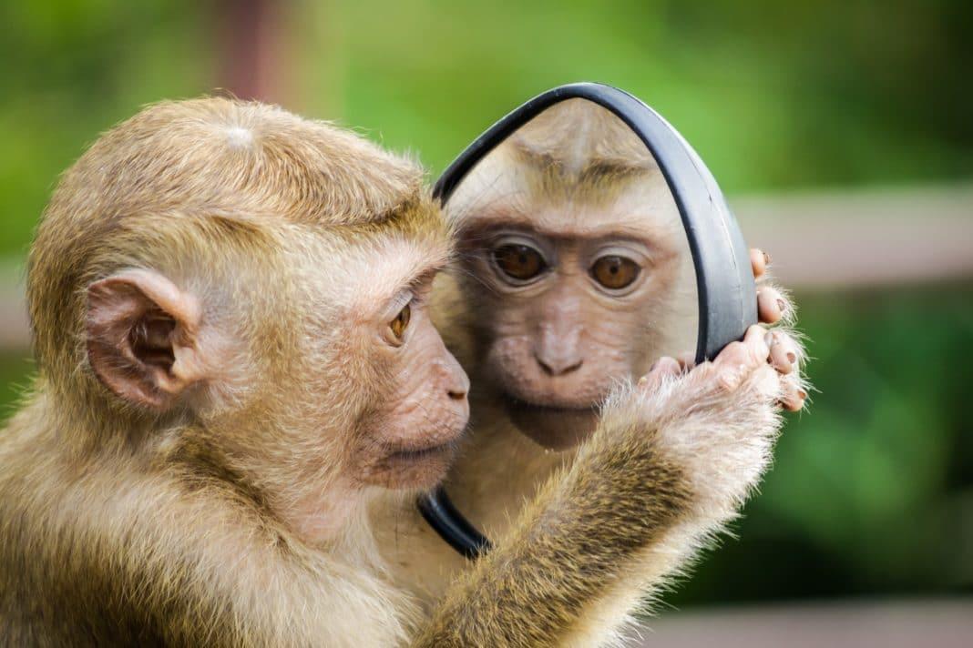 things to do in bali - monkeys