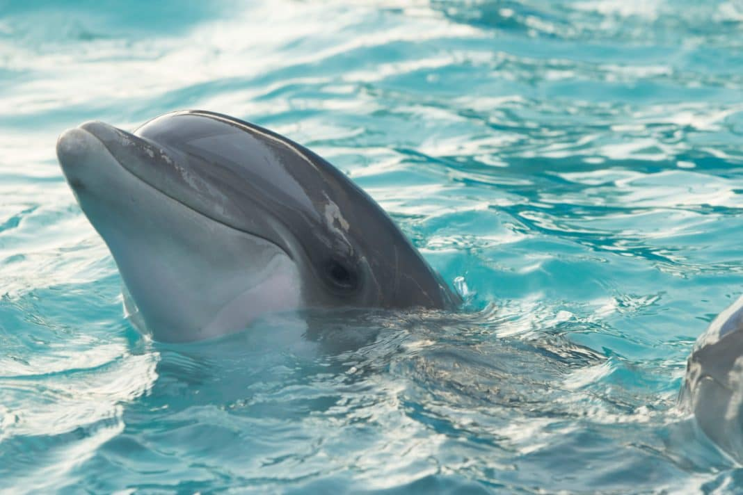 things to do in Destin - Go on a Dolphin Cruise