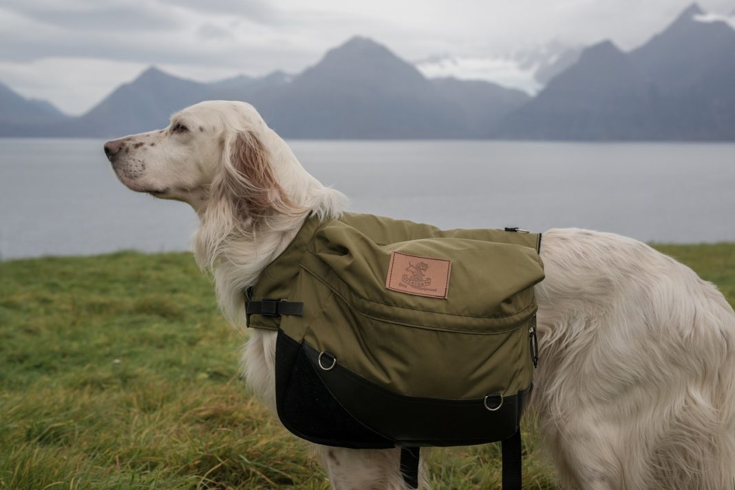 Choose Your Best Dog Backpack for Hiking - trekbible